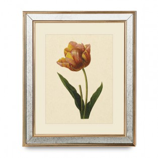 GRAFIKA TULIPAN - 50X60CM - MY HONEY HOME